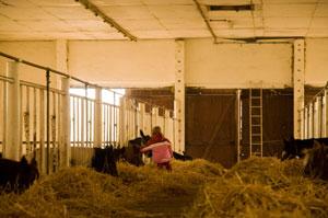 wissenswertes ber pferde reiterhof z then im schullandheim im reiter und pferdezentrum z then. Black Bedroom Furniture Sets. Home Design Ideas